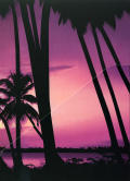 Grand Theft Auto: Vice City Windows Inside Cover Right Flap - Front (Holds Poster)