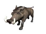 Warthog - one of the 10 bonus animals