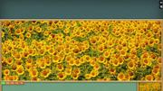 Pixel Puzzles Ultimate: Sunflowers Screenshot