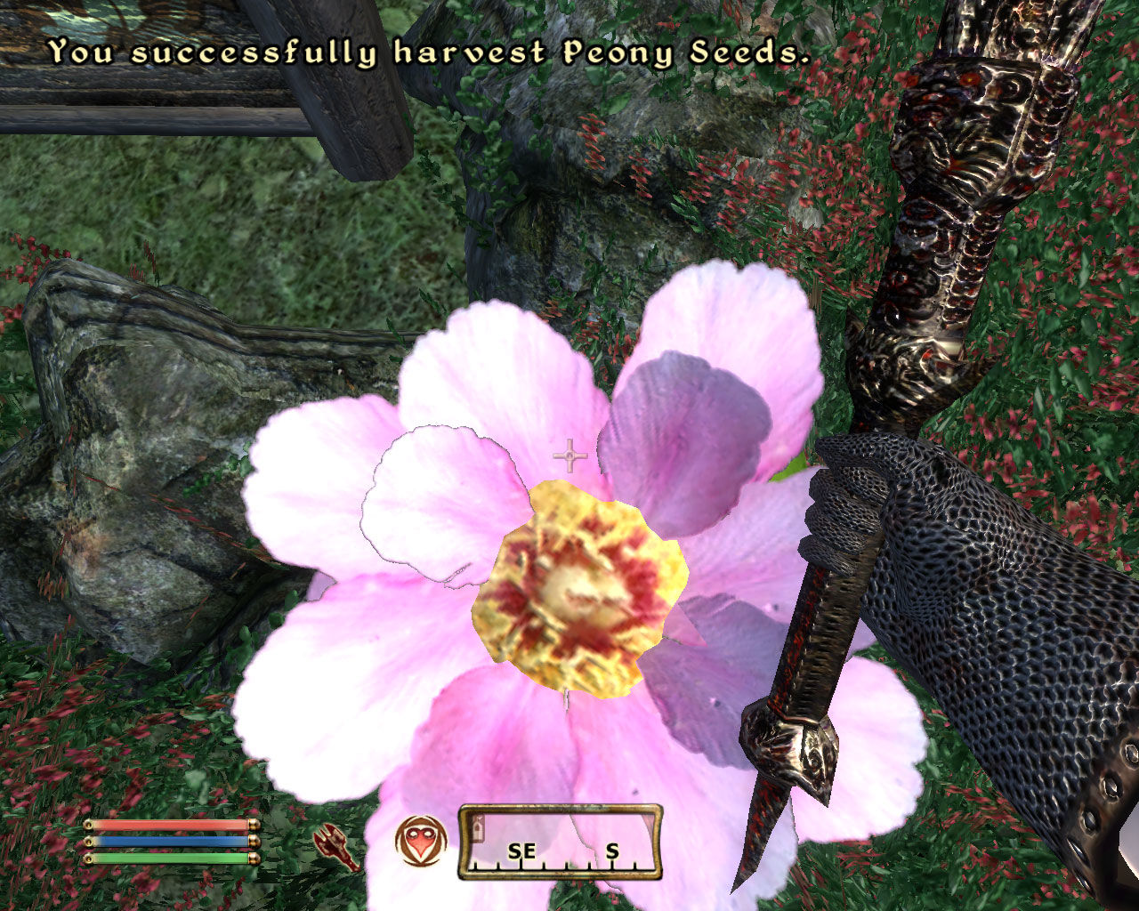 The Elder Scrolls IV: Oblivion Windows Harvesting alchemical reagents