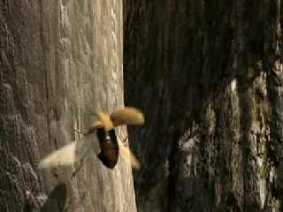 Riven: The Sequel to Myst Windows Mobile A beetle flies away when we touch it