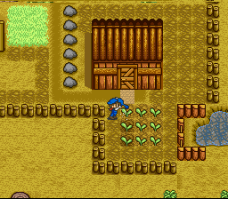 Harvest Moon SNES Remember to always water your crops everyday, otherwise they won't grow as fast which results in a late harvest.