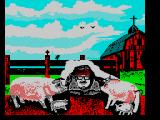 Gee Bee Air Rally ZX Spectrum Landed into a family of pigs