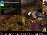 Neverwinter Nights: Shadows of Undrentide Windows In SoU, there seems to be more for a Druid to do. More lengthy conversations with animals is one.