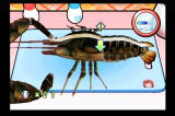 Cooking Mama: Cook Off Wii Digitized lobster