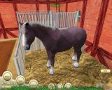 Paws & Claws: Pet Vet Windows Buying a horse!