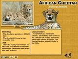Animals of Africa Windows The cheetah's diet and breeding habits and it's standing as far as conservation goes