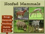 Animals of Africa Windows Hoofed Mammal selections