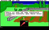 King's Quest DOS A carrot. (EGA/Tandy)