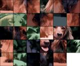 Picture Puzzle Browser The 30-piece 6x5 puzzle