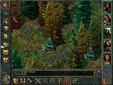 Baldur's Gate Windows In the wilderness of Cloakwood you can sometimes find beautiful floral patches