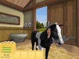 Let's Ride! Friends Forever Windows Your horse needs affection