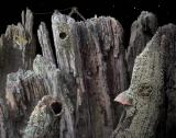 Samorost Browser The third room is a blasted place