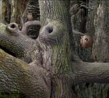 Samorost Browser The fourth room has a hidden problem