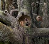 Samorost Browser How can I enjoy my hi-fi set with all this woodland noise?