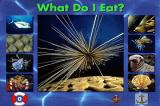 "Undersea Adventure DOS ""What do I eat ?"" game"
