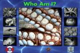 "Undersea Adventure DOS ""Who Am i ?""  game"