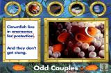 Undersea Adventure DOS Odd couples tour