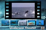 Undersea Adventure DOS Dolphins at the movie theater