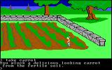 King's Quest PC Booter Getting a carrot from the carrot patch. (Original PCjr release)