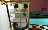Octodad Windows Browsing the fridge