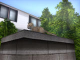 Jinkō Shōjo 3 Windows I play this game to look at cats, not chase women! :)