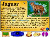 Let's Explore the Jungle Windows Of all the cats, the jaguar looks best in its encyclopedia page (my favorite, the tiger, didn't look too cute).