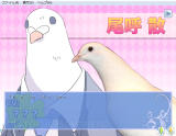 Hatoful Boyfriend Windows Every pigeon is shown as a... human?
