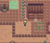 Harvest Moon SNES Turnip harvest! When the leaves grow large enough, it means you can harvest your crops. Harvest=Money.