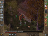 Baldur's Gate II: Throne of Bhaal Windows One of the game's peaceful areas. I try talking to a deer...