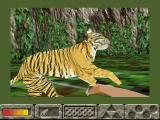 Jungle Legend Windows Under attack from a very fast moving tiger. (Isn't this on the wrong continent?)