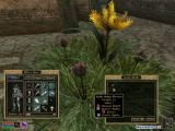 The Elder Scrolls III: Tribunal Windows You can find some new alchemy ingredients in Mournhold.