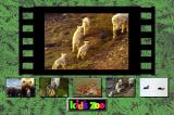 Kid's Zoo: A Baby Animal Adventure DOS Main menu
